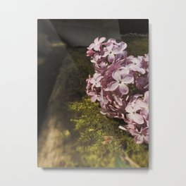 Nature blooming on a tree in countryside Metal Print