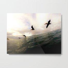 Sea Birds - Encinitas, CA Metal Print