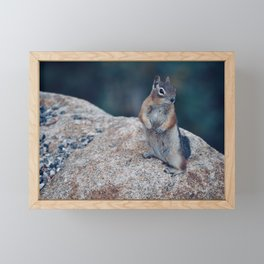 Ground Squirrel, Rocky Mountain National Park Framed Mini Art Print