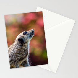 Inquisitive. Stationery Cards
