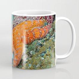 Summer Starfish Coffee Mug