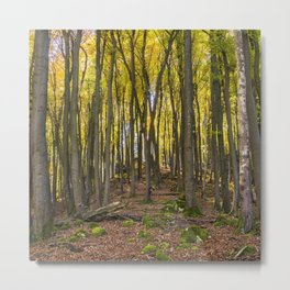 Autumnal Forest Metal Print