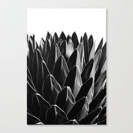Agave Chic #7 #succulent #decor #art #society6 Canvas Print