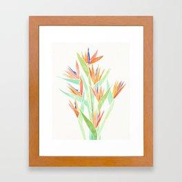 Birds of Paradise ~ tropical bouquet Framed Art Print