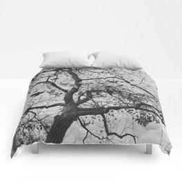 Parc Comforters