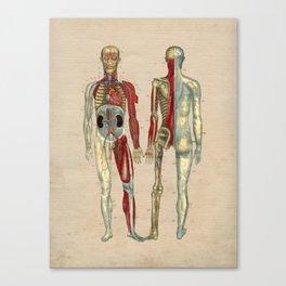 Human Artery Anatomy 1841 Print Canvas Print