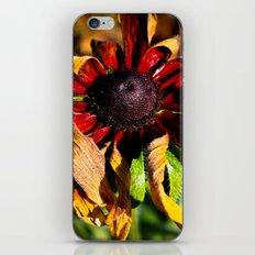 Still Vibrant iPhone & iPod Skin