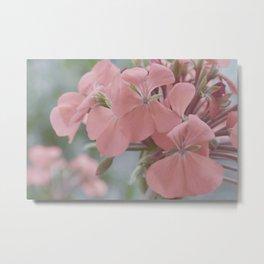 Zonal Pelargonium Neon Pink Metal Print