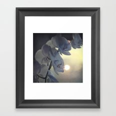 Morning tenderness  Framed Art Print