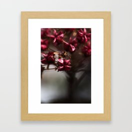 Lathyrus Framed Art Print
