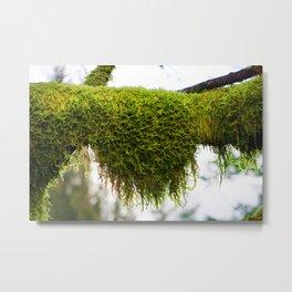Moss of Oregon Metal Print