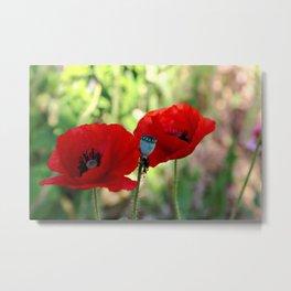 poppies in the summer Metal Print