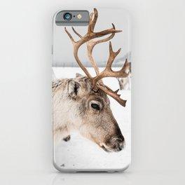 Reindeer with Antlers In Snow | Norway Tromsø Winter Art Print | Arctic Animal Travel Photography iPhone Case