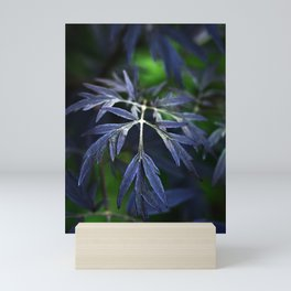 The Beauty of Sambucus Nigra Foliage Mini Art Print