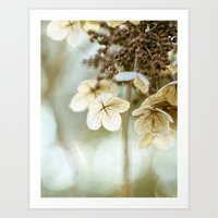 hydrangea Art Prints featuring hydrangea by Bonnie Jakobsen-Martin