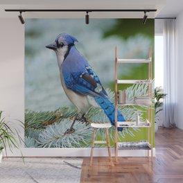 Blue Jay  in Winter Pine Tree Wall Mural