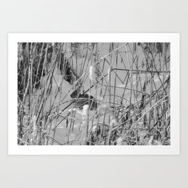 Rabbit in hiding Art Print
