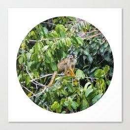 Monkey in a Tropical Jungle Circle Fine Art Print Canvas Print