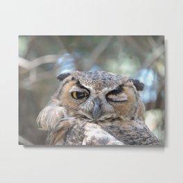 Owl Wink Metal Print
