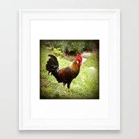rooster Framed Art Prints featuring Rooster by Deborah Lehman