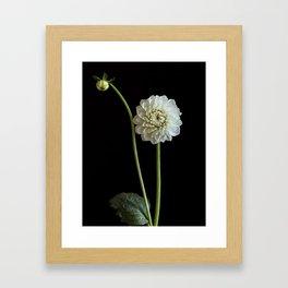 Dahlia Rhonda Flower Framed Art Print