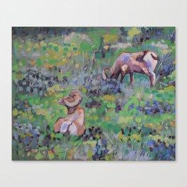 BigHorn Sheep, Yellowstone National Park Canvas Print