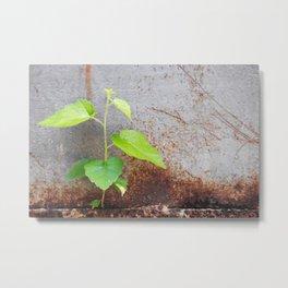 Fresh green with rusty grey Metal Print