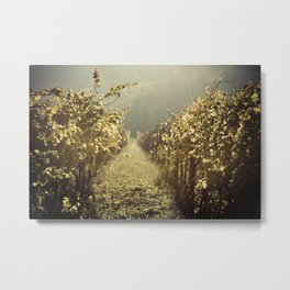 Autumn grapes vine Metal Print