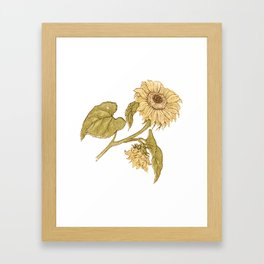 Vintage Kate Greenaway Sunflower Framed Art Print