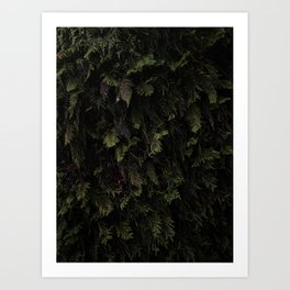 Taking a closer loook at the moss covering an oak tree Art Print