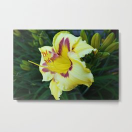 Daylily Yellow and Purple Flower Metal Print