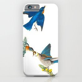 Blue Bird Vintage Illustration iPhone Case