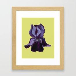 iris solo Framed Art Print