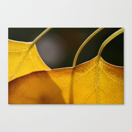 Autumn Veins  Canvas Print