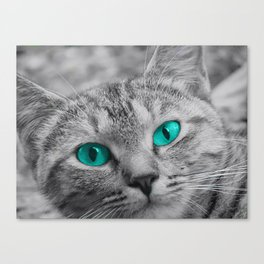 Cat with Piercing Turquoise Eyes Canvas Print