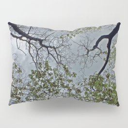 Tree canopy in the spring Pillow Sham