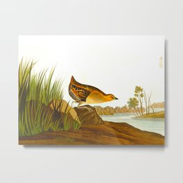 Yellow-breasted Rail Bird Metal Print