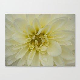 Yellow Chrysanthemum Flower Canvas Print