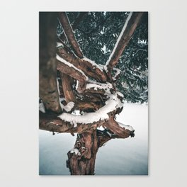 Tangled trunk Canvas Print