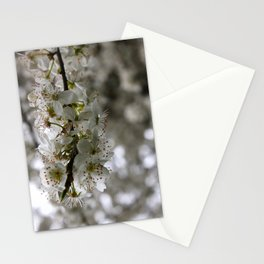Spring Blossoms  Stationery Cards