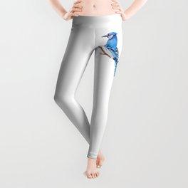 Watercolor illustration. Bright Blue Jay bird on white background. Leggings