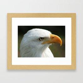 Face of a Male Bald Eagle Framed Art Print