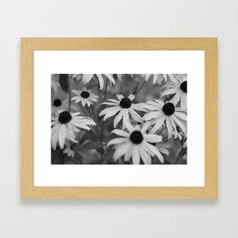 Black-Eyed Susans Framed Art Print