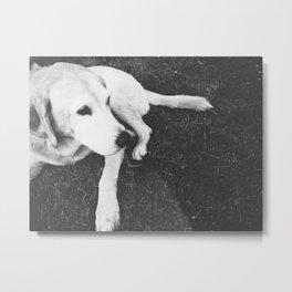 Dog Years Metal Print