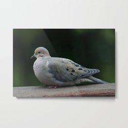 Backyard Bird Metal Print