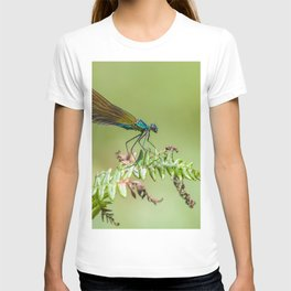 Summer lady T-shirt