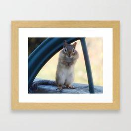 Chippy portrait Framed Art Print