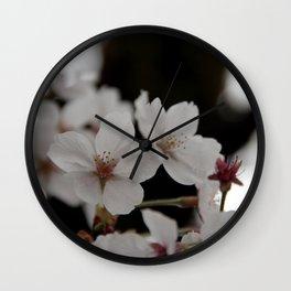 Sakura blossoms up close Wall Clock