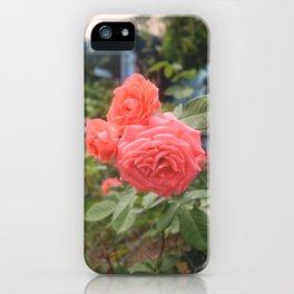 Rosebush iPhone Case