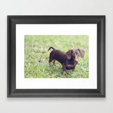 Chocolate Anyone? Framed Art Print